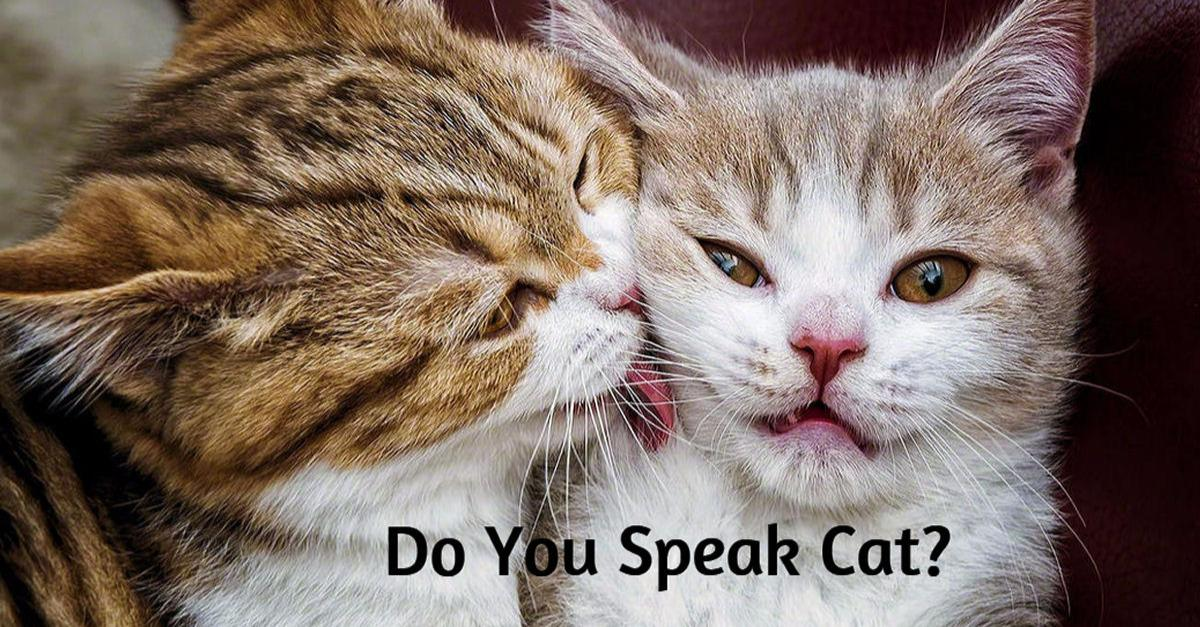 Test Your Ability to Speak Cat