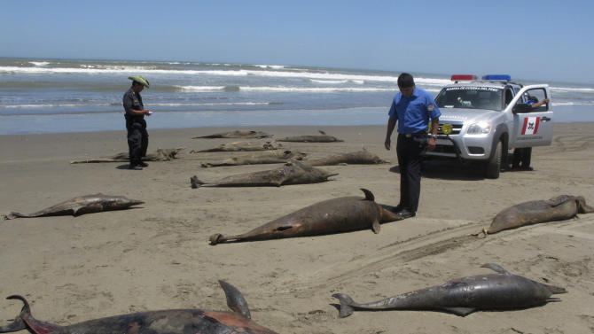 In this April 6, 2012 photo, officials stand next to dolphin carcasses on the shore of Pimentel Beach in Chiclayo, Peru. Scientists and Peruvian officials are investigating a mass die-off of hundreds of dolphins along the South American country's coast. (AP Photo/Nestor Salvatierra)
