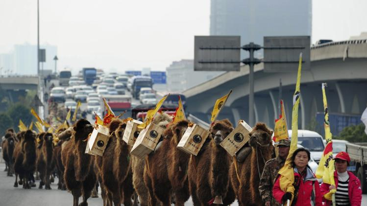 About 100 camels carrying boxes of tea walk on a highway during an event re-enacting the ancient tea trade journey from China to Europe in Changsha