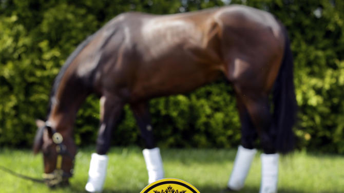 Kentucky Derby winner Orb grazes after arriving at Pimlico Race Course in Baltimore, Monday, May 13, 2013. Orb is scheduled to run in the Preakness Stakes on May 18. (AP Photo/Patrick Semansky)