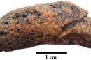 Fossilized Bladder Stone Uncovered in Medieval Polish Cemetery