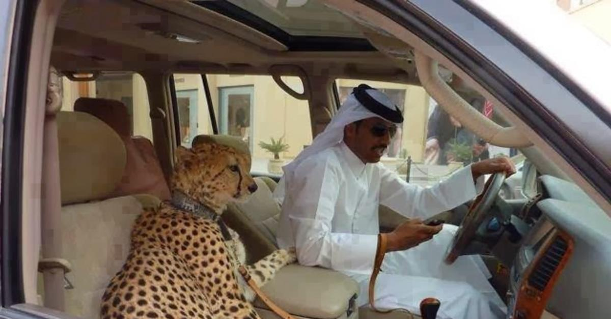 17 Crazy Things You'll Only See in Dubai