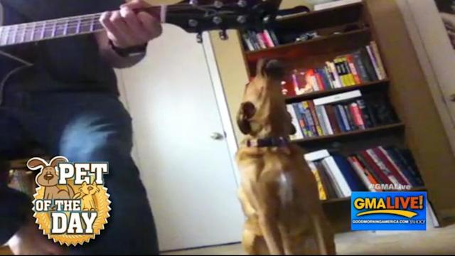 Dog Sings Along to Harmonica
