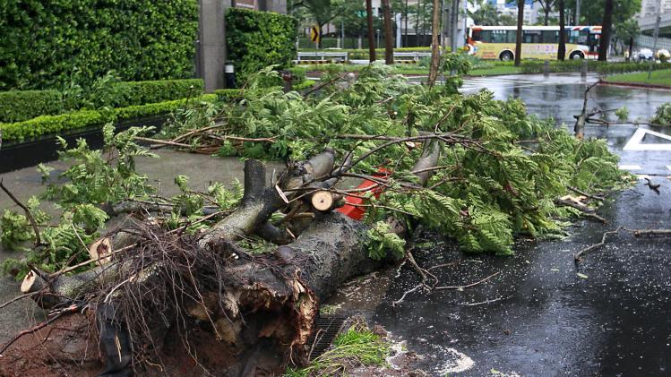 Trees lie on a road after being blown over by strong winds from Typhoon Matmo which hit Taiwan, in Taipei