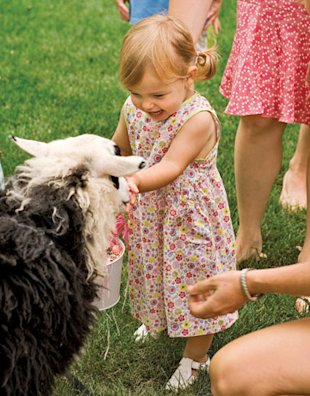 little girl petting a sheep