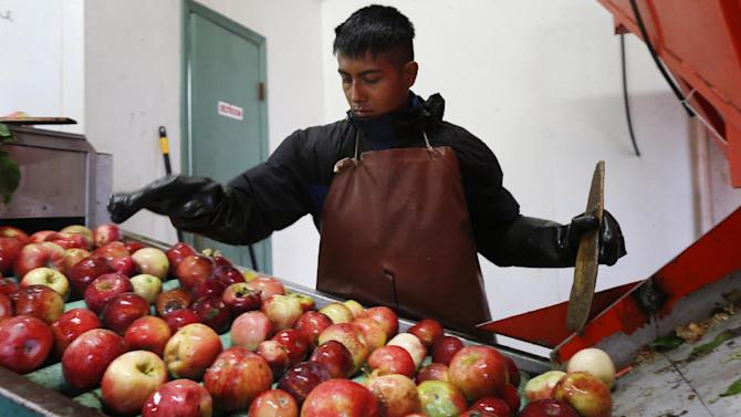FILE - In this Oct. 14, 2014 file photo, Perry Loyola sorts apples before they are pressed for juice and used for cider at Samascott Orchards in Kinderhook, N.Y. The Conference Board on Thursday, Oct. 23, 2014 said that its index of leading indicators rose 0.8 percent in September following a flat reading in August which originally had been reported as a small 0.2 percent gain. It was the best showing since a 1.1 percent advance in July. (AP Photo/Mike Groll, File)