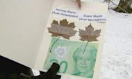 Bank Of Canada Notes Use 'Wrong' Maple Leaf