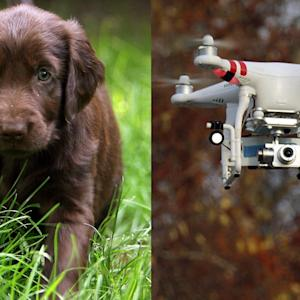Volunteers Are Using Drones To Help Find Stray Dogs