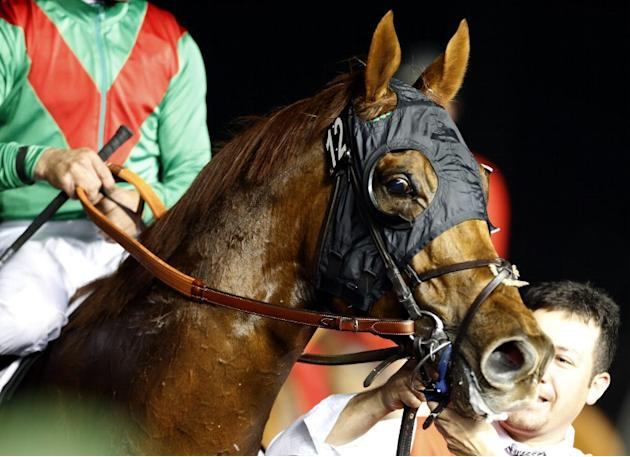 Joel Rosario's horse, Animal Kingdom is seen after Rosario won the $10 million Dubai World Cup, the world's richest race, at Meydan race track in Dubai on March 30, 2013. The 2011 Kentucky Derby winne