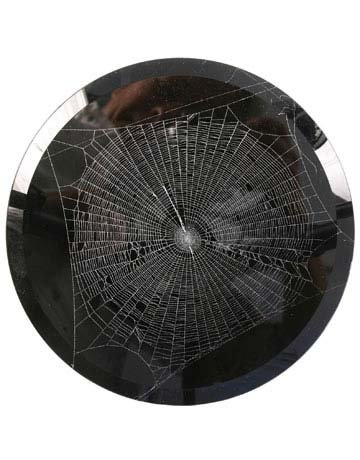 Spiderweb
