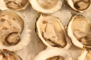 Oysters are a natural source of zinc. (AFP)