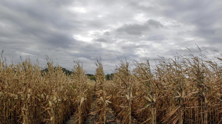 Corn shortage idles 20 ethanol plants nationwide