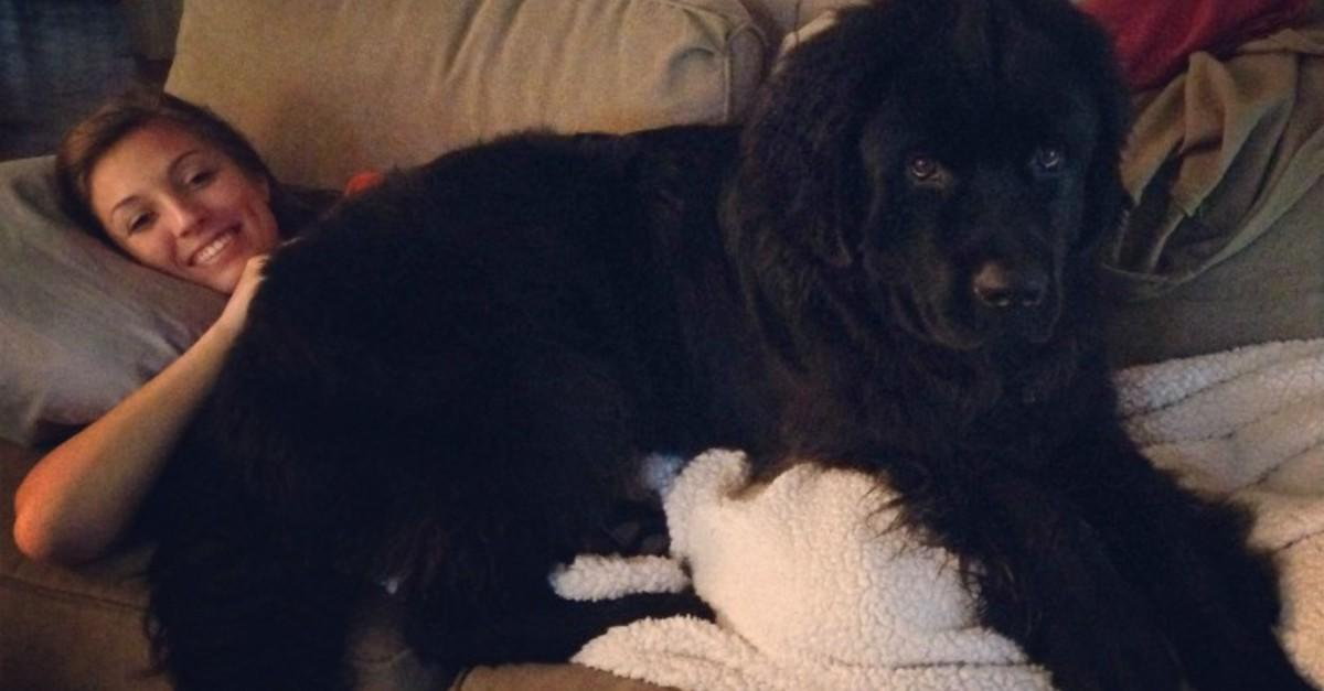 17 Giant Dogs Who Think They Are Lap Dogs