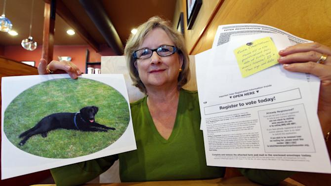 "In this photo taken Wednesday, July 11, 2012, Brenda Charlston holds a photo of her long-deceased dog, Rosie, and a voter registration form for ""Rosie Charlston"" that arrived in the mail for the canine last month, in Seattle. Rosie was a black lab who died in 1998. A left-leaning group called the Voter Participation Center has touted the distribution of some 5 million registration forms in recent weeks, targeting Democratic voting blocs such as unmarried women, blacks, Latinos and young adults. But residents and election administrators around the country have also reported a series of bizarre and questionable mailings addressed to animals, dead people and people already registered to vote. (AP Photo/Elaine Thompson)"