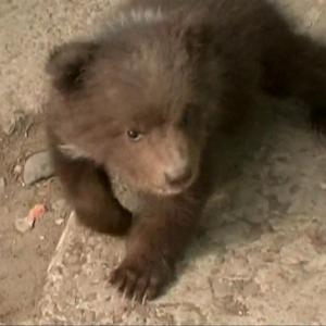 A Russian Family Adopted This Really Cute Baby Bear