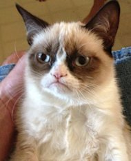Guidelines for White Papers and Case Studies image grumpy cat 4
