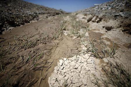 Global economic losses from drought to top $8 billion: report