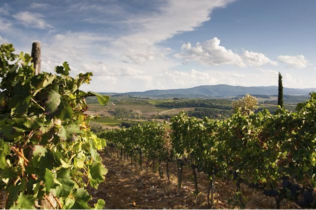 Travel Tuscany wine region
