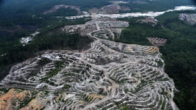 This photograph taken on February 24, 2014 during an aerial survey mission by Greenpeace in Central Kalimantan province on Indonesia's Borneo Island, shows cleared trees to make way for a palm oil plantation in a Borneo forest