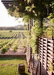 vineyard-wedding-venue-1