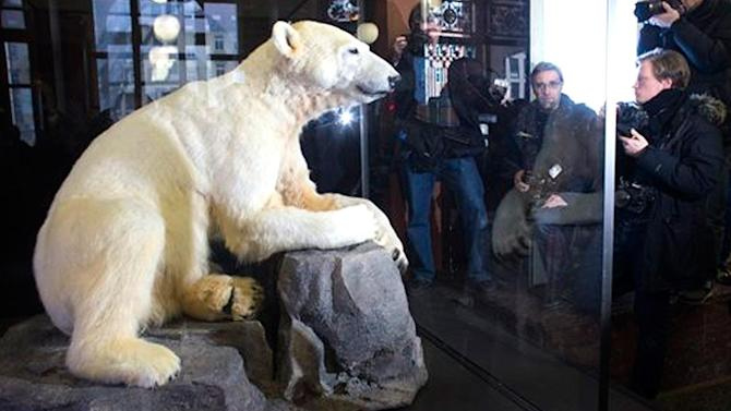 Knut the polar bear becomes museum display in Berlin
