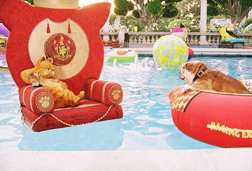 Garfield (voiced by Bill Murray ) and Winston ( Bob Hoskins ) at the pool in 20th Century Fox's Garfield: A Tail of Two Kitties