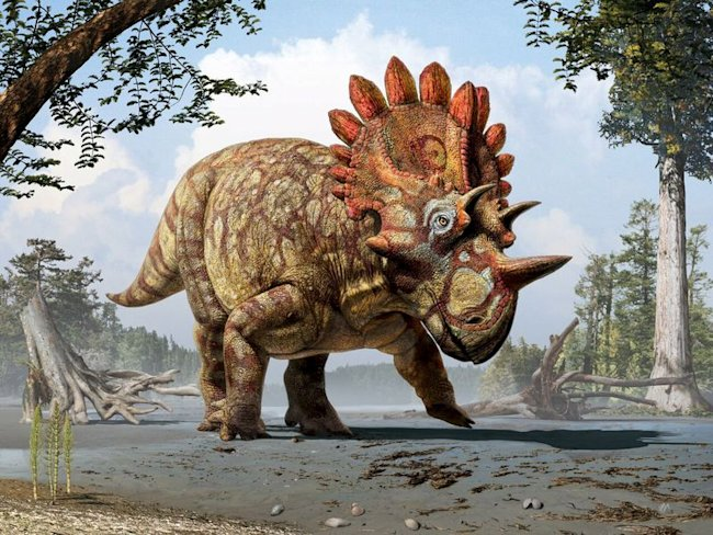 An artistic life reconstruction of a new horned dinosaur scientists named Regaliceratops peterhewsi in the paleoenvironment of the Late Cretaceous of ...