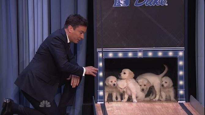 Adorable Puppies Predict Final Four on Fallon