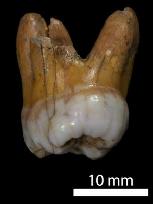 Genome of Mysterious Extinct Human Reveals Brown-Eyed Girl