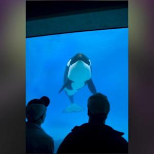 Martina McBride Follows Trisha Yearwood And Cancels Seaworld Gig Amid Blackfish Controversy