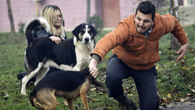 Bosnian animal activists Aldin Pasic, right, and Amela Turalic catch stray dogs in the Sarajevo suburb of Dobrnja, Bosnia, Tuesday, Nov. 27, 2012. Bosnia passed a law nearly four years ago banning the killing of strays, alarmed at a sharp rise in canine slaughter as wild dogs proliferated on Bosnian streets. But people ignored the law, largely because authorities failed to provide alternatives such as sterilization. Sarajevo has become the only city in Bosnia where the law is respected _ thanks to a new city-funded dog shelter run by animal protection activist Amela Turalic that performs sterilizations. (AP Photo/Amel Emric)
