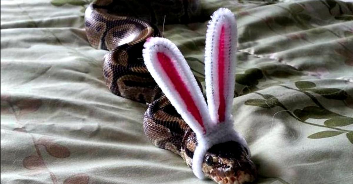 Snakes Wearing Hats is the Best Thing Ever