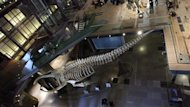 Une quipe du Musum national d&#39;histoire naturelle,  Paris, a annonc mercredi dans la revue scientifique britannique Nature avoir dcouvert le premier fossile presque complet d&#39;un insecte datant du Dvonien suprieur, il y a quelque 365millions d&#39;annes