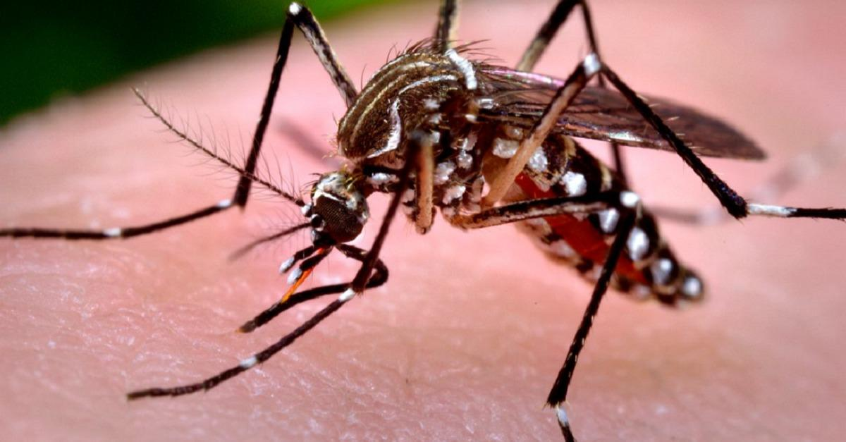 Worried About Zika? Here Are The Symptoms To Watch