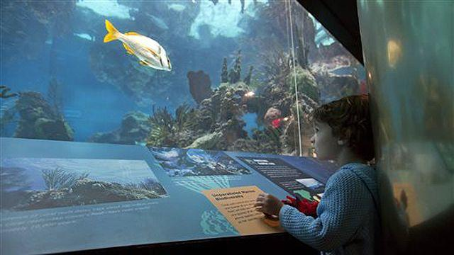 NYC Aquarium partially reopens after Sandy
