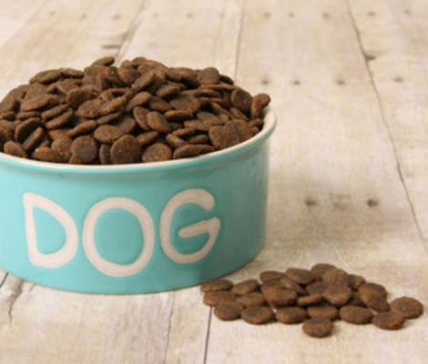 Salmonella and Pet Food Recalls
