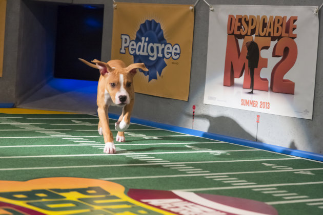 Puppy Bowl IX: Canine Cuties to Battle for Barking Rights on Super Bowl Sunday
