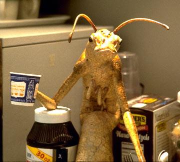 Alien Eats Coffee