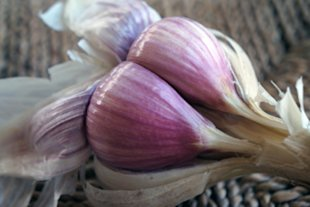 Get adventurous with heirloom garlic this fall. And if you're really bold, plant some of your own for next year!