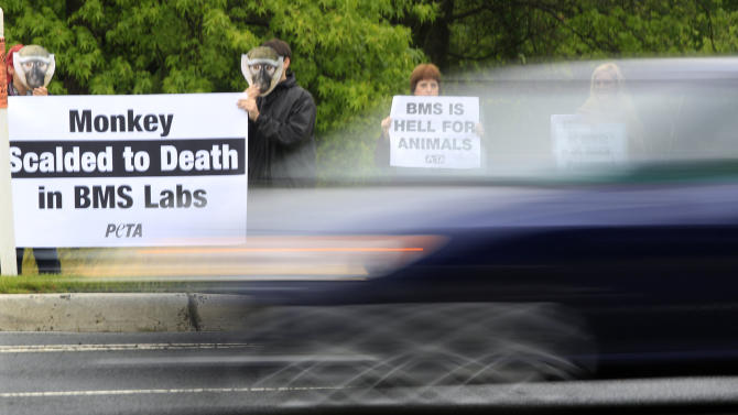 As traffic passes, people hold signs while they stand along a road near a shareholder meeting at Bristol-Myers Squibb in Plainsboro, N.J., Tuesday, May 1, 2012. The signs being held by the animal rights activists refer to an incident that the global biopharmaceuticals company has confirmed, where a New Jersey lab monkey accidentally remained locked in a cage being cleaned in near-boiling water last summer and was killed. (AP Photo/Mel Evans)