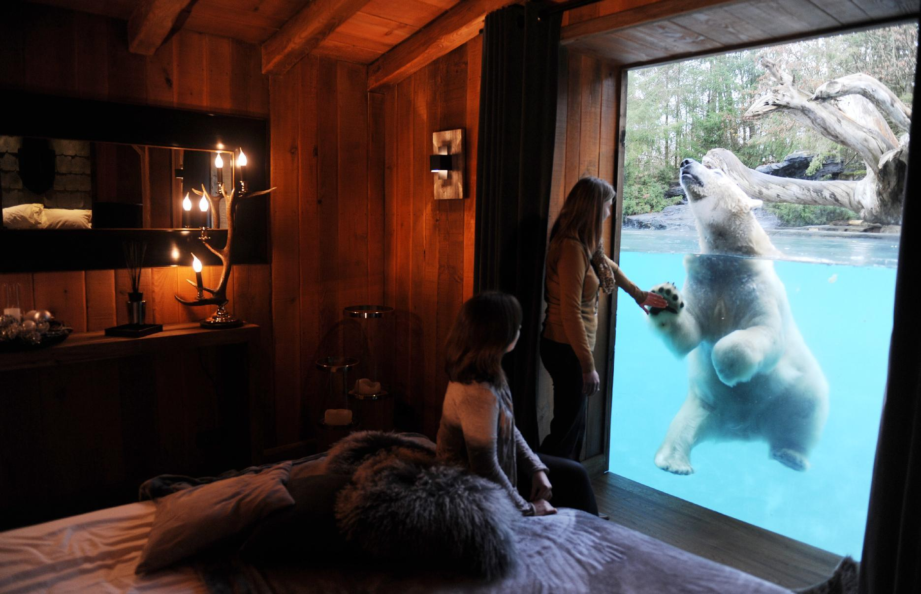 Sleeping with polar bears: French zoos evolve