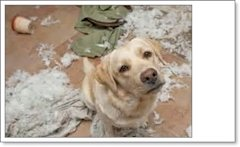 The Facebook Post That Saved A Dogs Life image dogtrouble socialmarketingfella