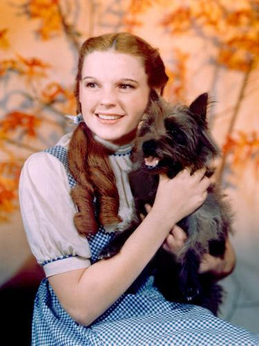 Toto from 'The Wizard of Oz'