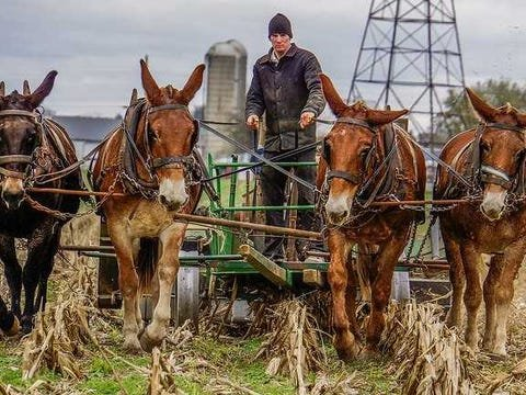 Amish country farmer