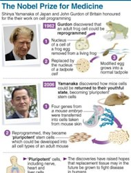 Graphic showing the work of the 2012 Nobel medicine prize winners