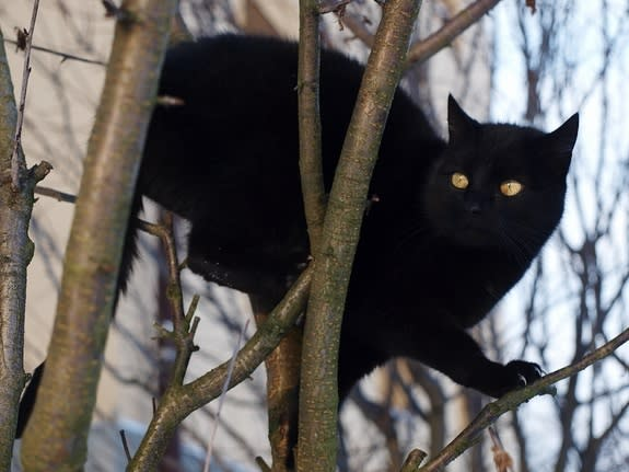 Black Cats Beware: Kitty Lovers Think You're Aloof