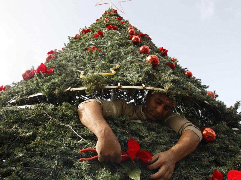 Christmas Tree Worker