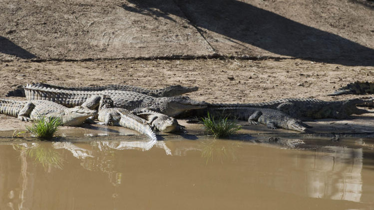 Help! Too many crocodiles, S.Africa police say