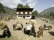 File photo shows a farmer loading mules with straw in Bhutan's Paro valley. The Himalayan kingdom of Bhutan is aiming to become the first nation in the world to turn its home-grown food and farmers 100% organic