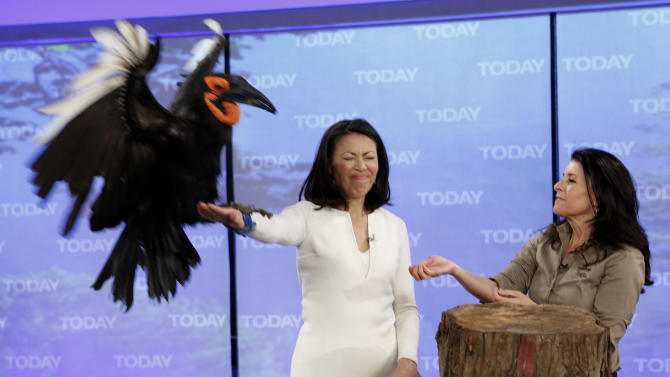 """This April 12, 2012 photo released by NBC shows co-host Ann Curry holding a bird and animal expert Julie Scardina on the """"Today"""" show in New York.  Curry, who joined the show as a news anchor in 1997, offered a tearful goodbye as co-host of NBC's """"Today"""" show on Thursday, June 28, 2012. She will remain at NBC News to be anchor-at-large and national and international correspondent. (AP Photo/NBC, Peter Kramer)"""